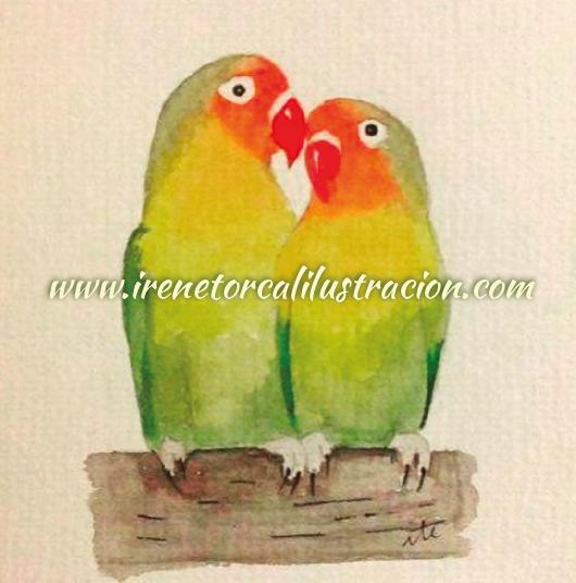 watercolor_agaporni