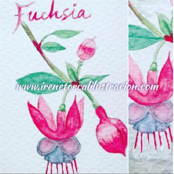 watercolor_fuchsia-01
